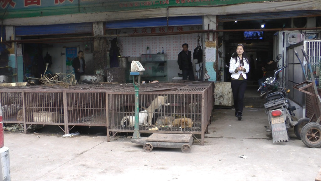 Animal Equality ha lanciato una petizione per chiudere i wet market (Foto: Animal equality/Flickr)